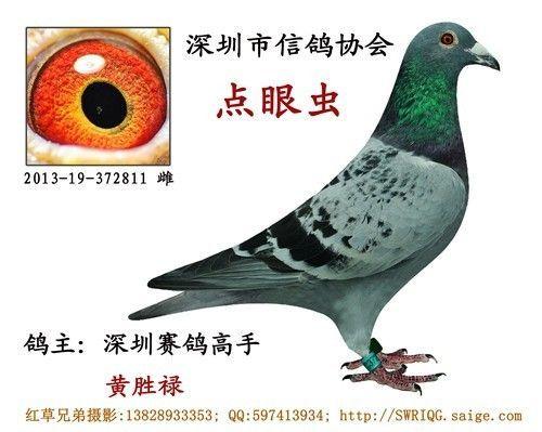 黄胜禄 深圳/标签:13828933353