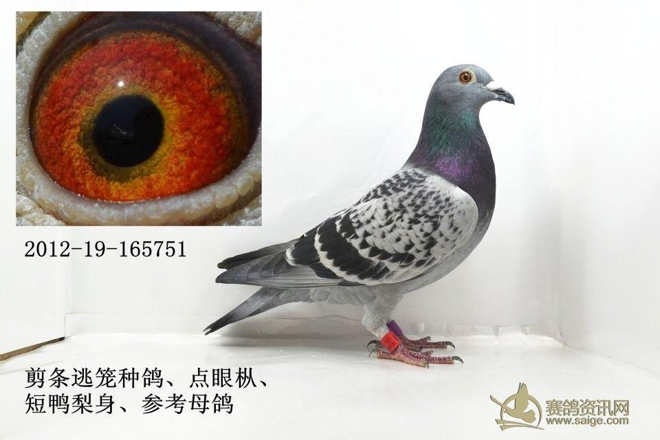 深圳翔鸽路地图