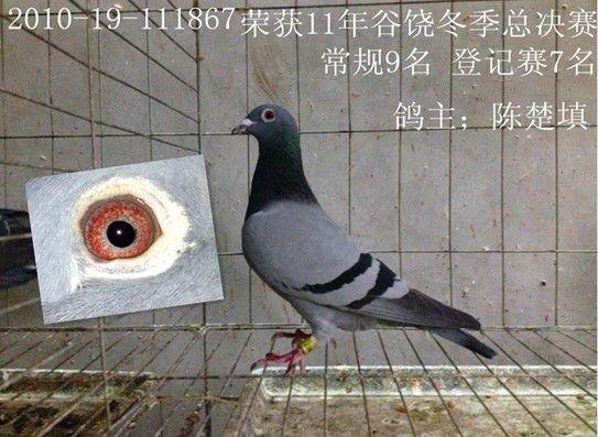 刚到潮阳谷饶陈楚填500公里总鸽9名登记赛7逮住苍蝇攥出屎来书法图片