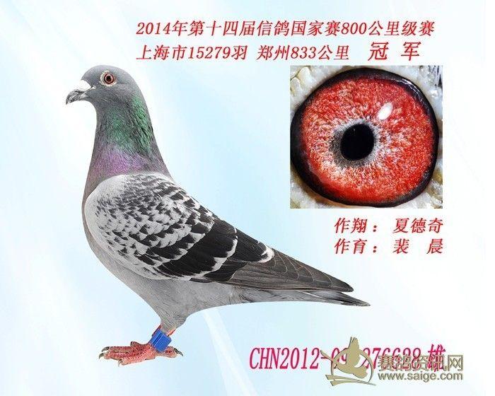 备战2022年北京冬奥会_赛鸽网