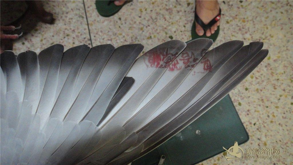 滚笼制作图解鸽子