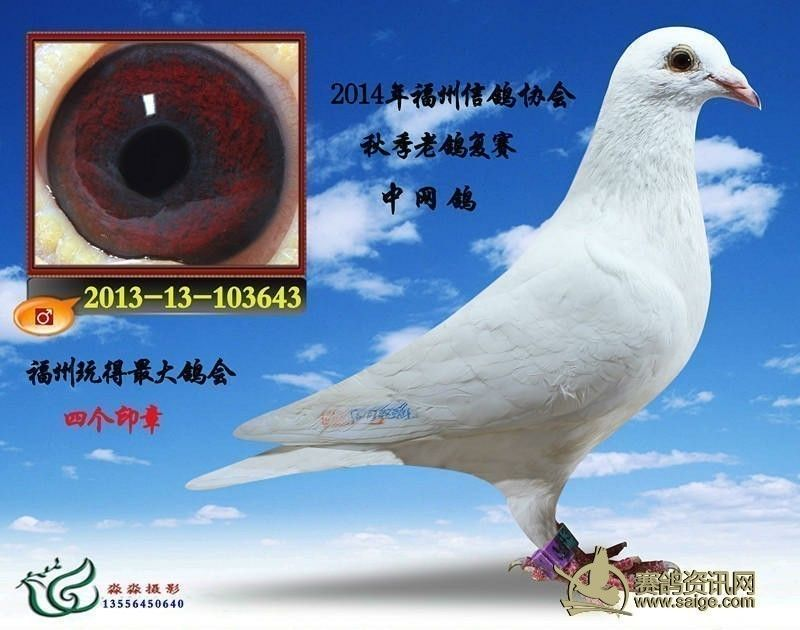 saige.com 宽800x630高       images.3158.