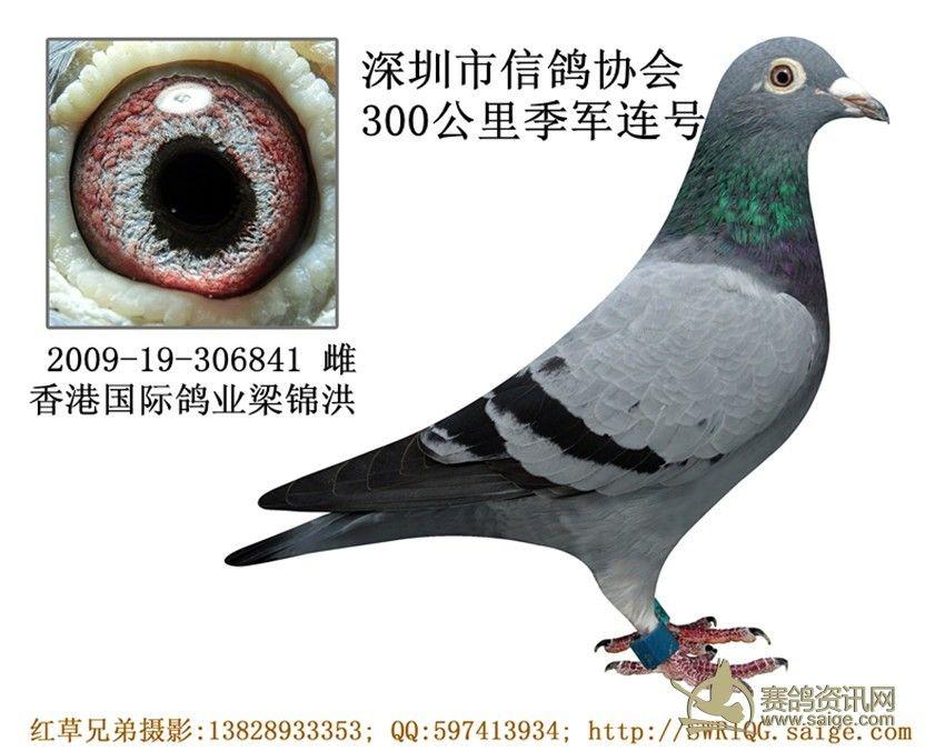 粱锦洪/标签:13828933353