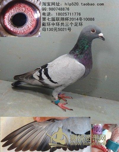 鸽子眼沙的详细图解