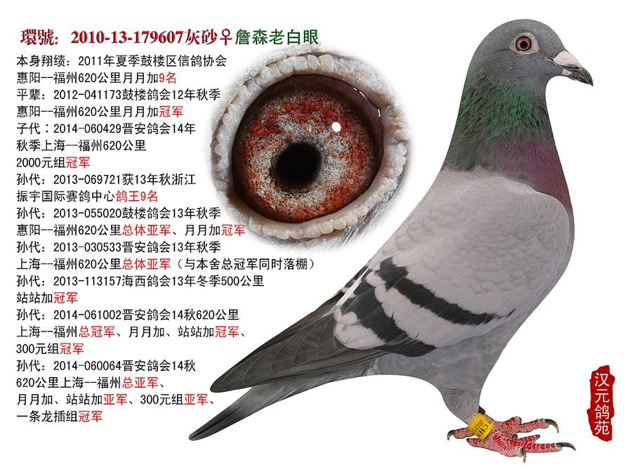 乌龟鸽动物鸟类图示鸟教学900_672鸽子怎么v乌龟图片