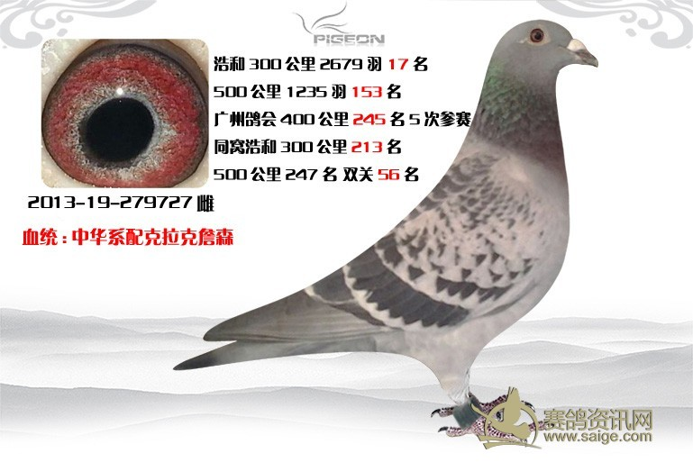 中华鸽系配克拉克詹森