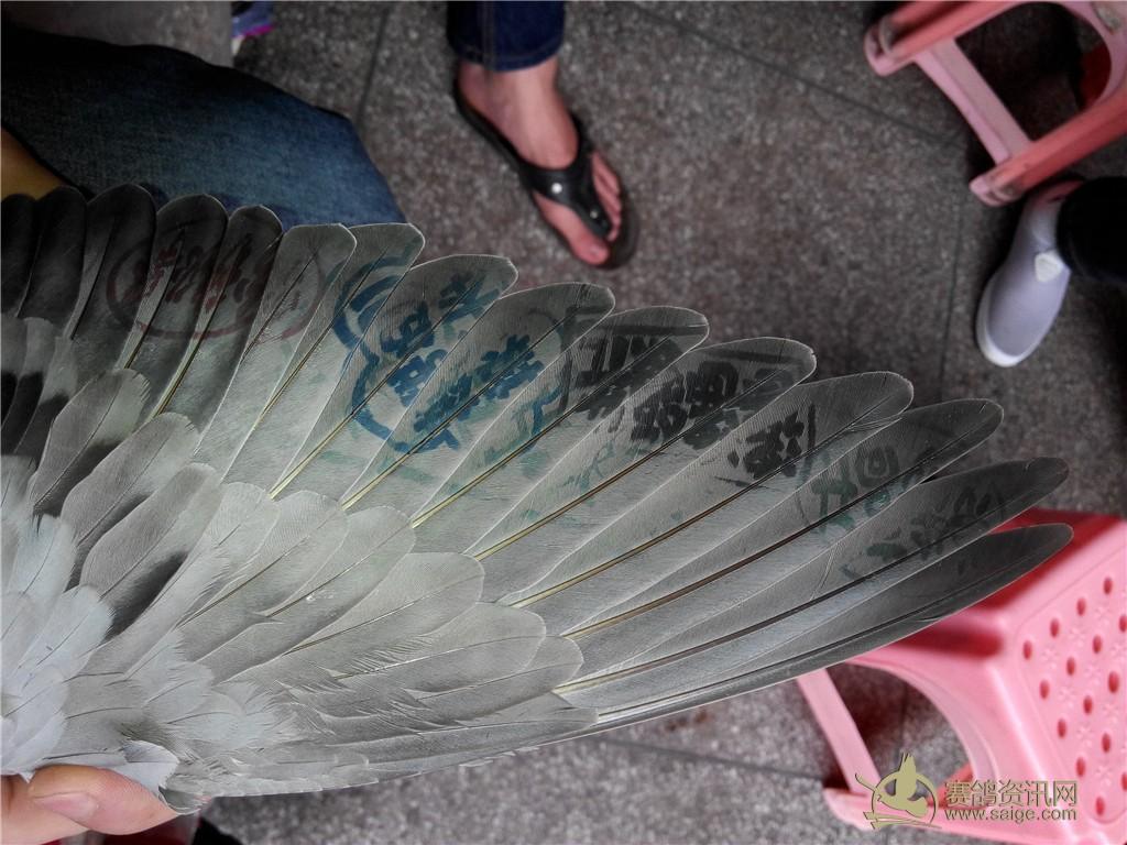 鸽子的骨架结构