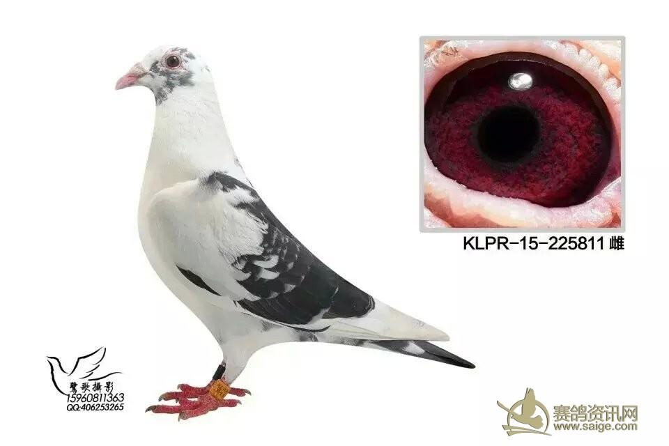 信鸽翅膀骨骼结构图片