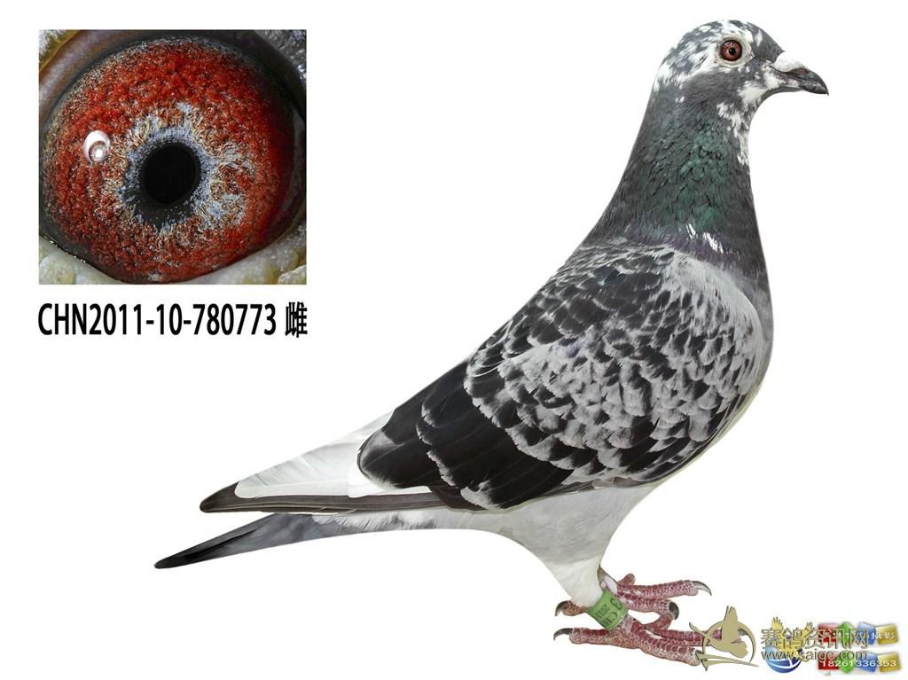 集研发生产与销售为一体的集团性科技有限公司_赛鸽资讯网