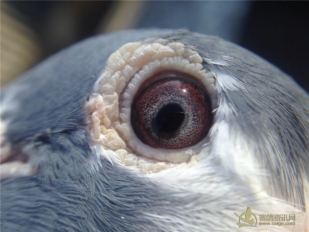 黑暗中动物的眼睛动态