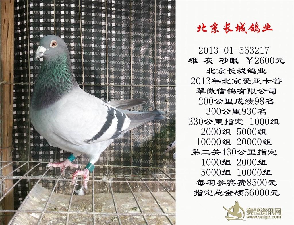 北京长城鸽业 2013年北京爱亚卡普翠微信鸽有限公司200公里成绩98名-3