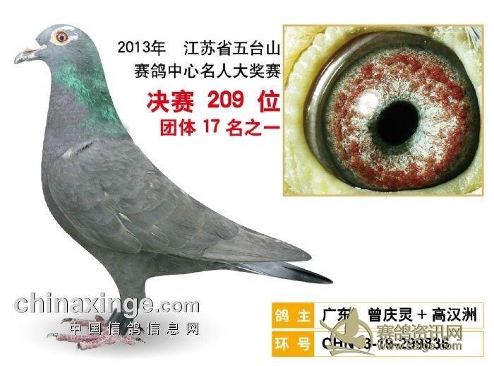 福建/点击看鸽主介绍