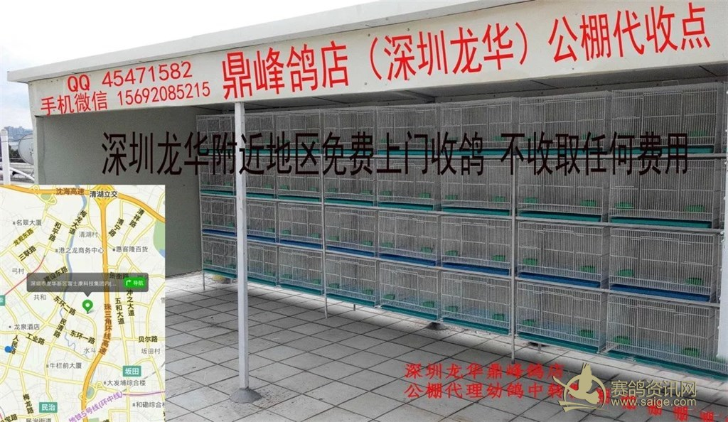 副本 2015/19/0234942/标签:15692085215手机QQ微信(同号)鼎峰鸽店(深圳龙华)