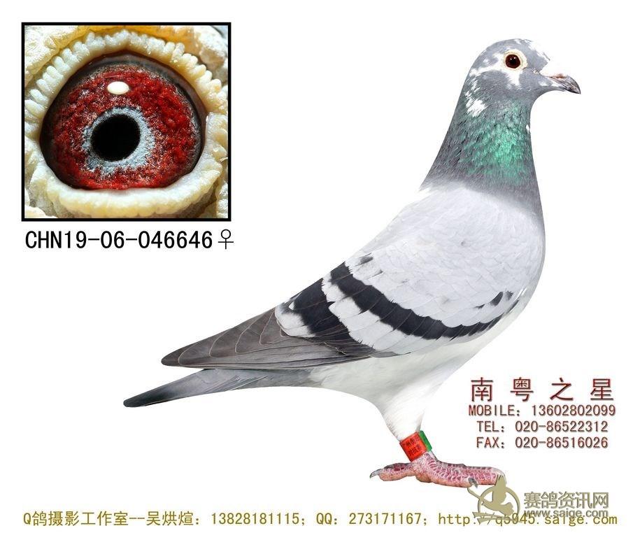 罗剑星 深圳/标签: