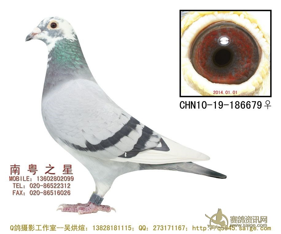 罗剑星 深圳/同血系