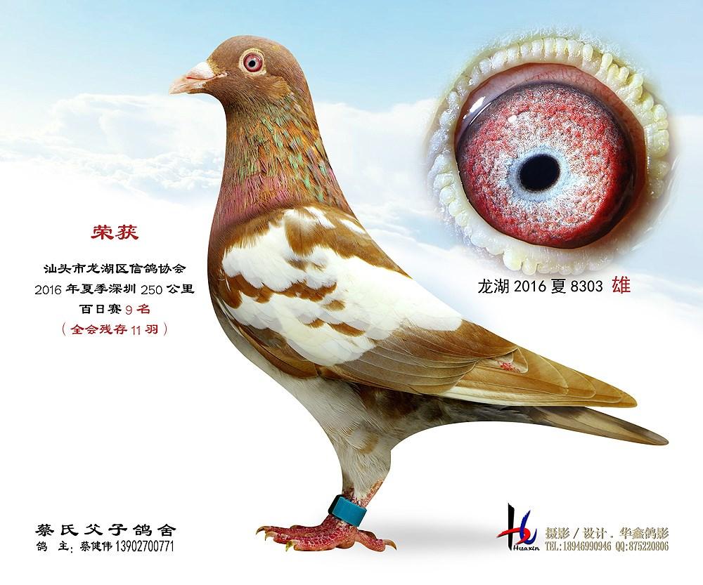 16年夏汕头龙湖百日赛9名