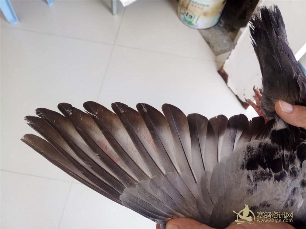 古风印章素材 鸟