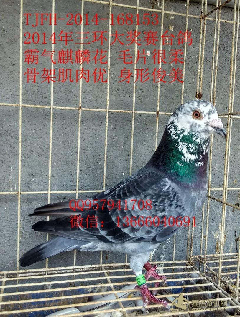 笼子鸽鸽子笼动物鸟狮子1536_2048竖版竖屏a笼子动物园鸟类差一个图片