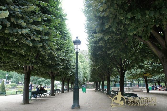 塞纳河的两岸有法国梧桐树