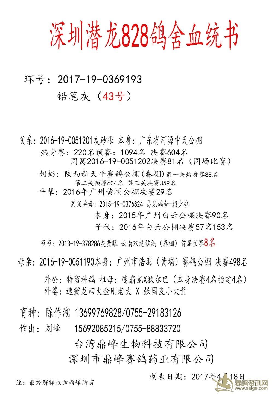 陈作湖 深圳/出售800元速霸龙X小火箭深圳潜龙828鸽舍/陈作湖血统鸽...
