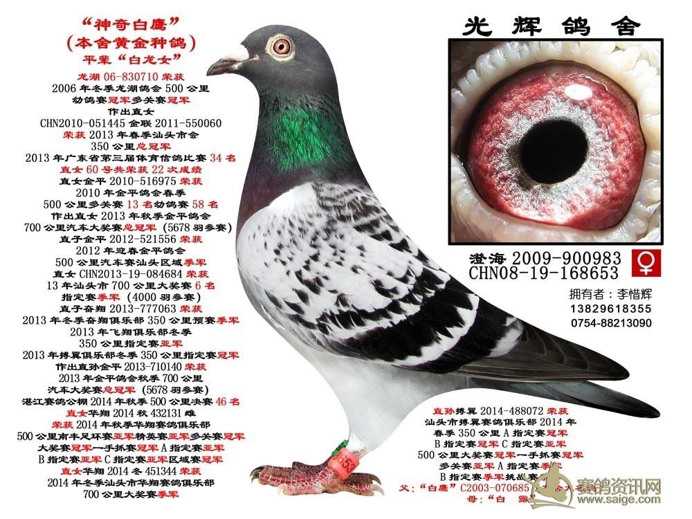 神奇白鹰 08-168653