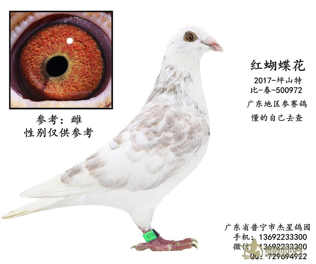 深圳/标签: