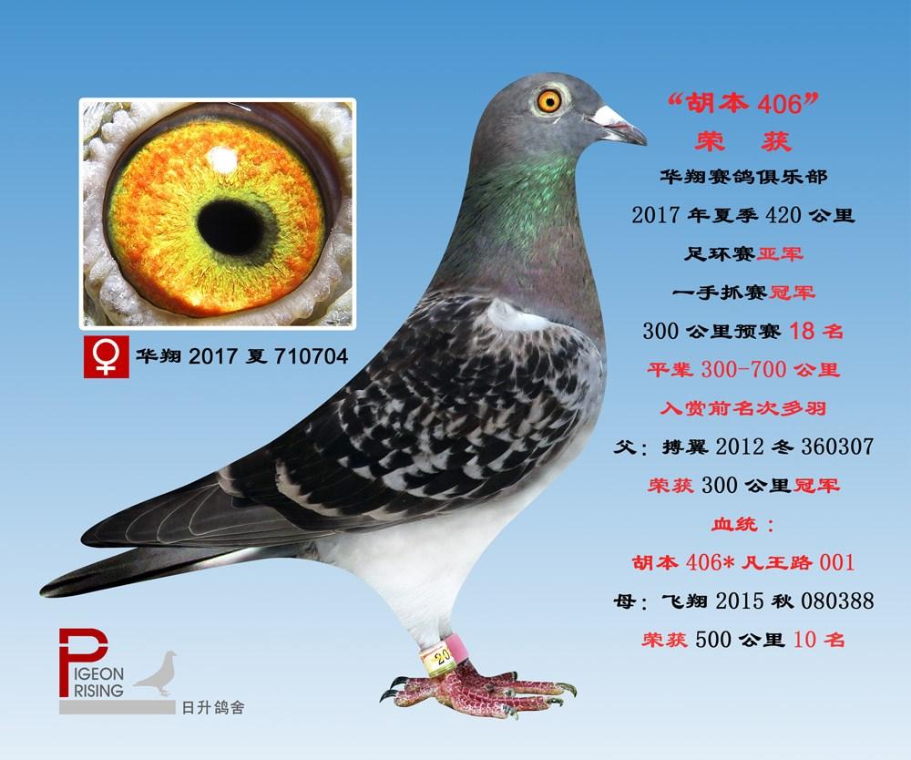 A华翔2017夏710704雌2名