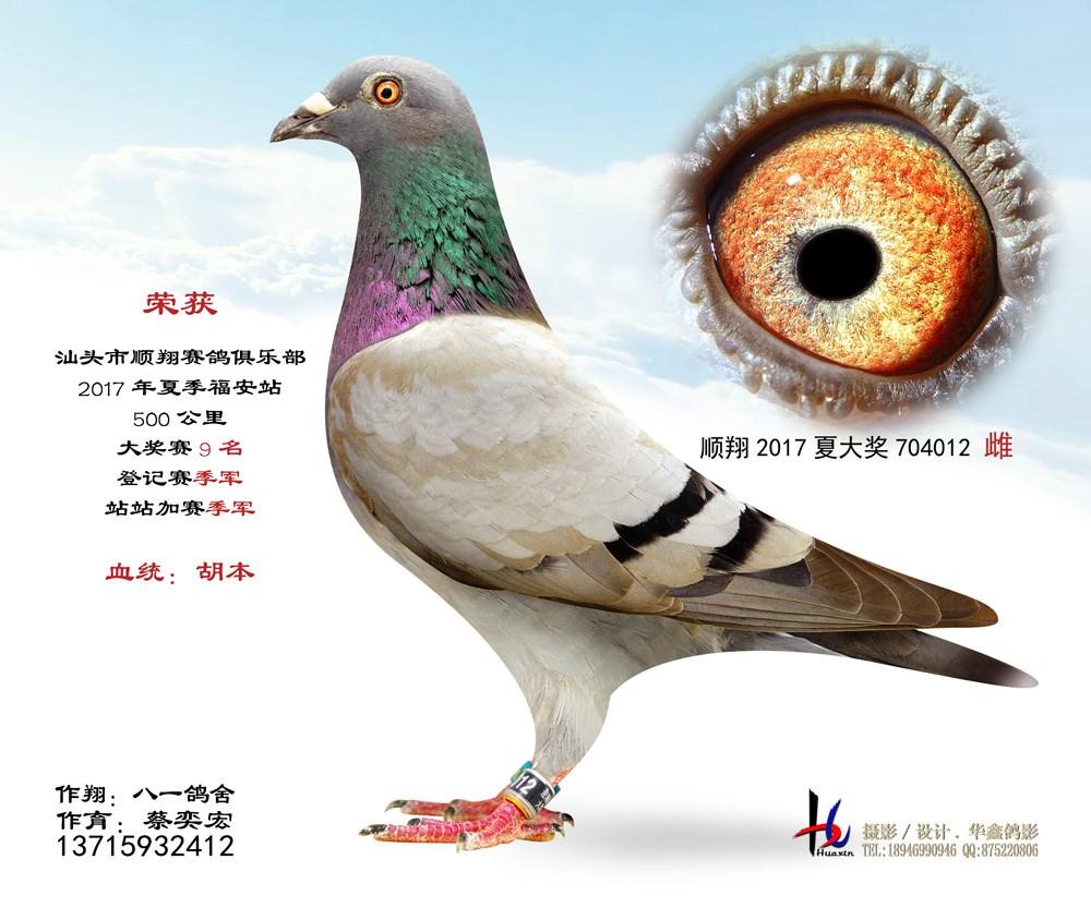17年夏季站站加赛季军  八一鸽舍 蔡奕宏