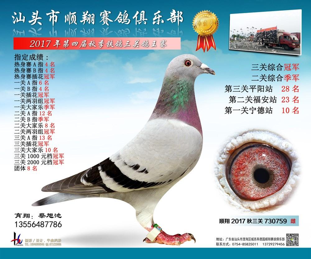 17年秋铁鸽三关综合冠军 蔡旭池
