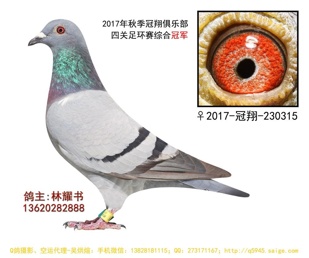 17年秋揭阳冠翔俱乐部520公里四关综合冠军 林耀书