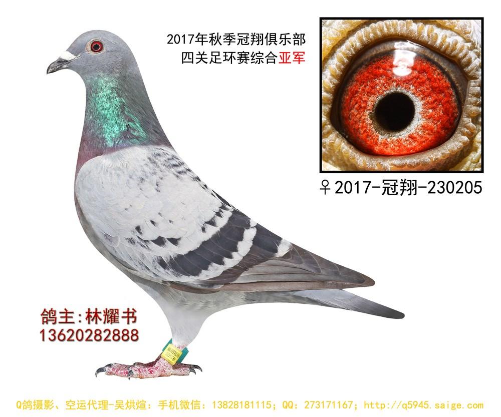 17年秋揭阳冠翔俱乐部520公里四关综合亚军 林耀书