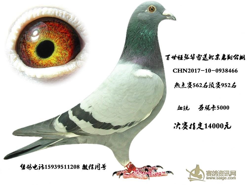 鸽子眼结构图