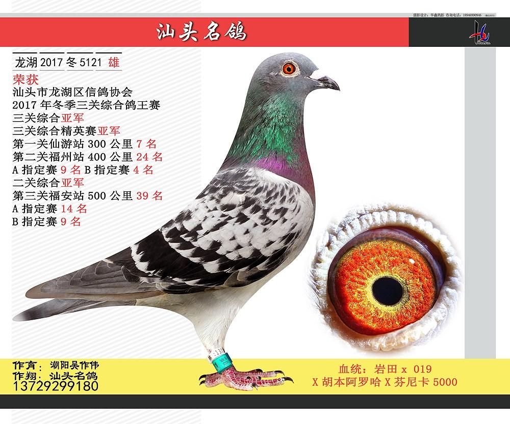 17年冬三关综合鸽王赛亚军 汕头名鸽 潮阳吴作伟