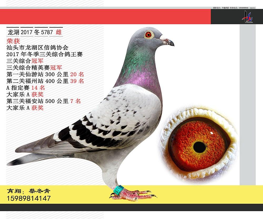 17年冬三关综合鸽王赛冠军 蔡冬青
