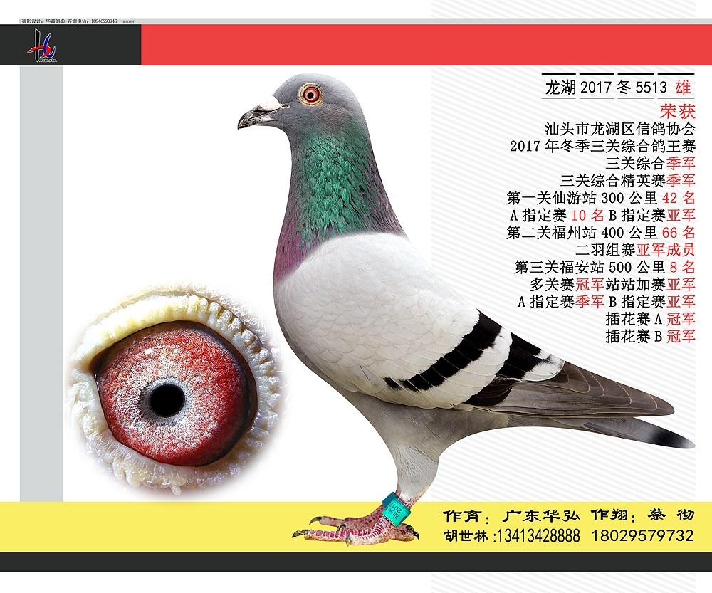 17年冬三关综合鸽王赛季军 蔡彻 广东华弘