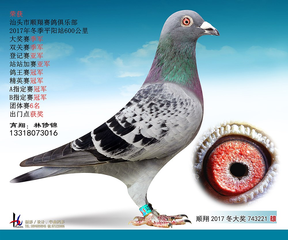 17冬平阳600公里精英赛冠军 林修锦