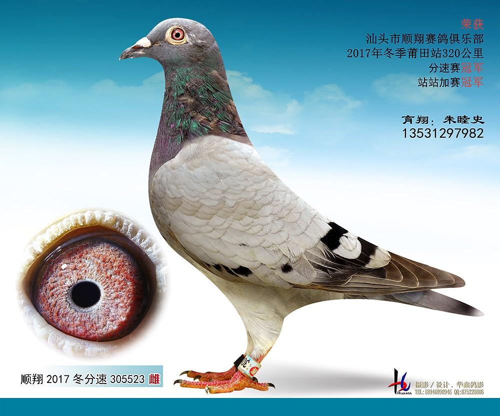 17冬莆田320公里分速赛冠军 朱睦史