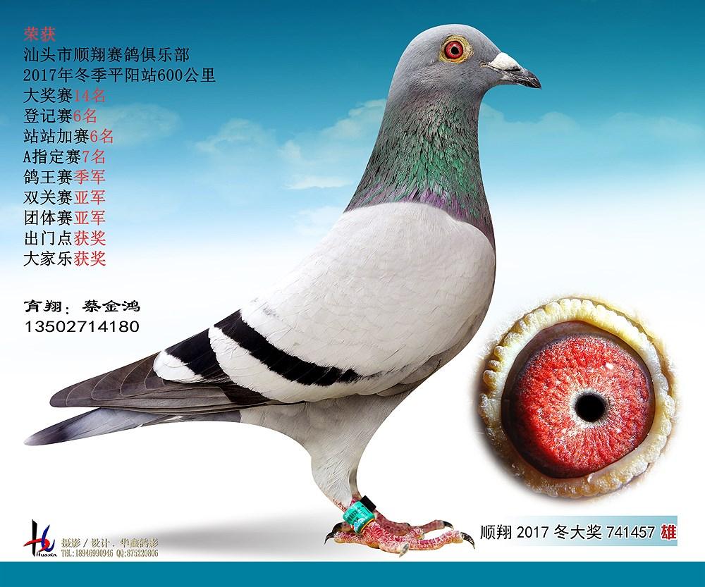 17冬平阳600公里双关赛亚军 蔡金鸿