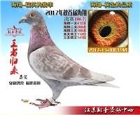 江苏翔圣赛鸽中心106名