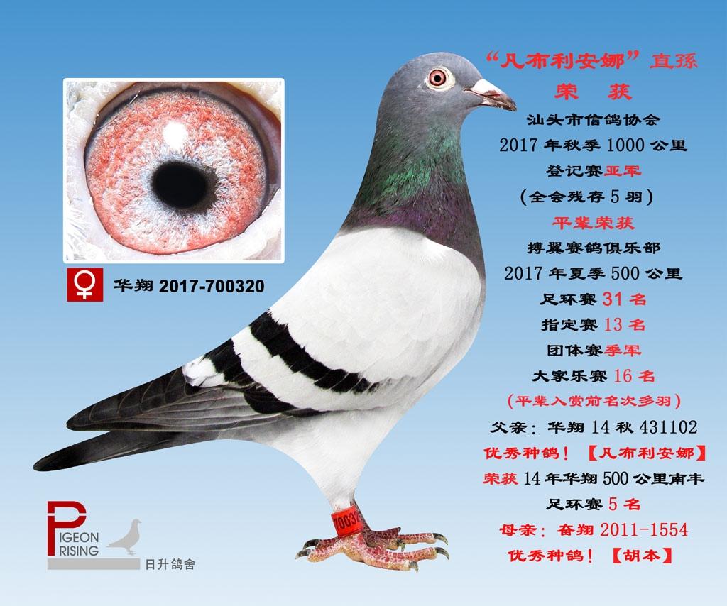 华翔2017-700320雌