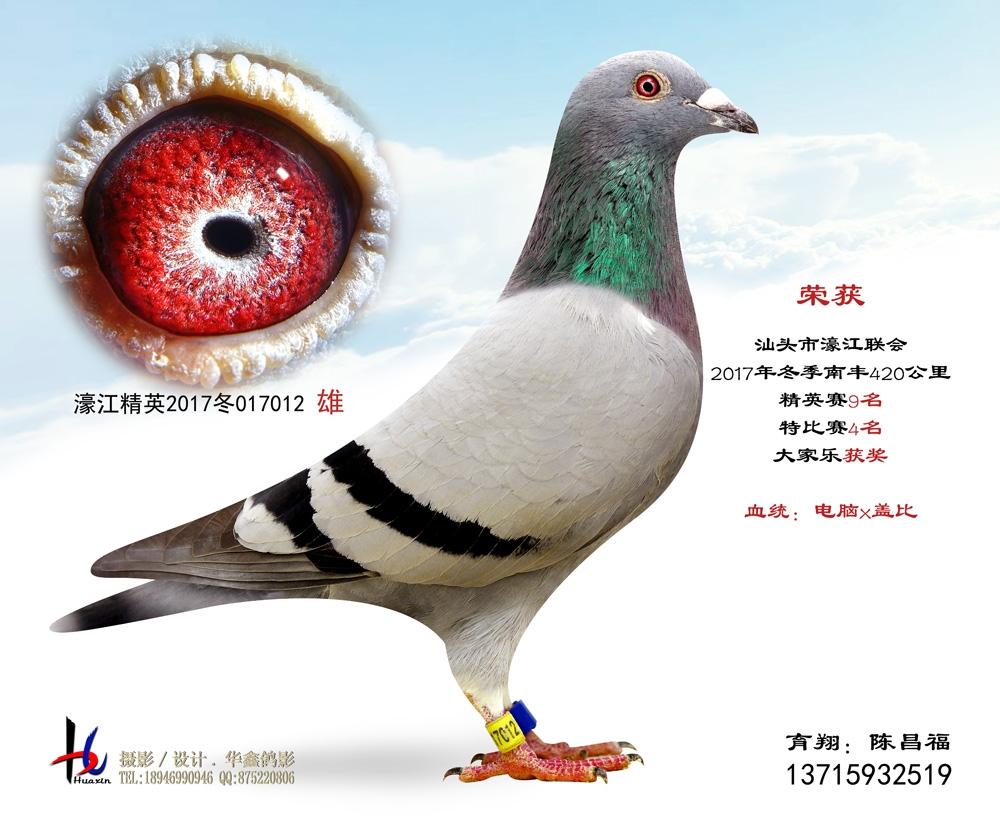 濠江联会2017冬季420公里精英赛9名 陈昌福