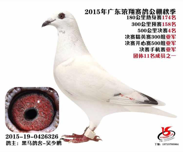 2015年广东浓翔公棚决赛4名