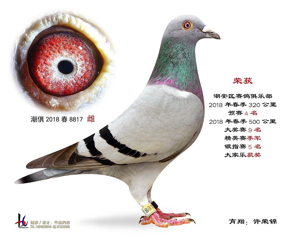 18春500公里大奖赛9名 许荣锦