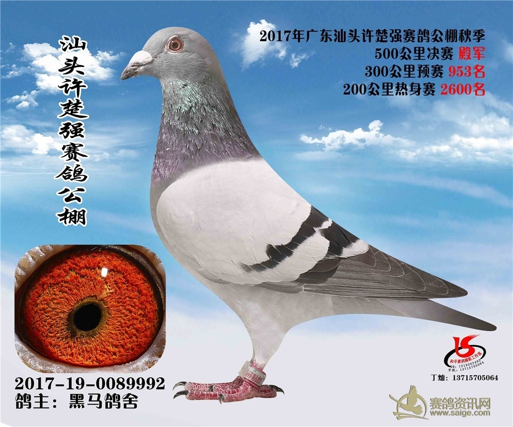2017年广东汕头许楚强公棚决赛4名