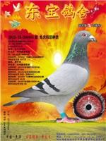 本舍特留种鸽(2013-13-206885)