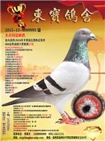 本舍特留种鸽(2015-13-0089995)