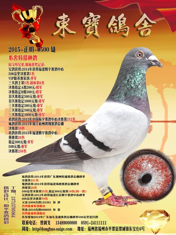 本舍特留种鸽(2015正明0500)