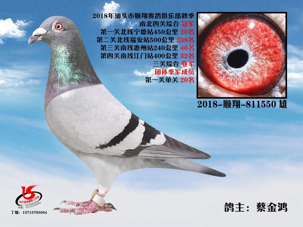 18年秋南北四关综合冠军 蔡金鸿