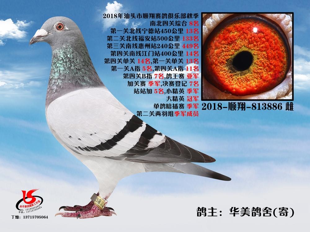 18年秋南北四关综合8名 华美鸽舍(寄)