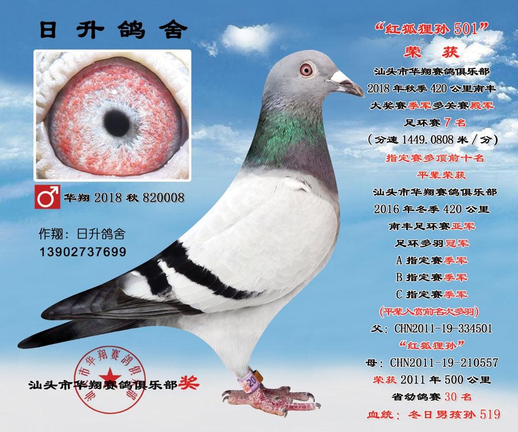 华翔2018秋820008雄7名